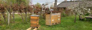 Weiß-Ferdl Mittelschule: Bienen-AG 4.0