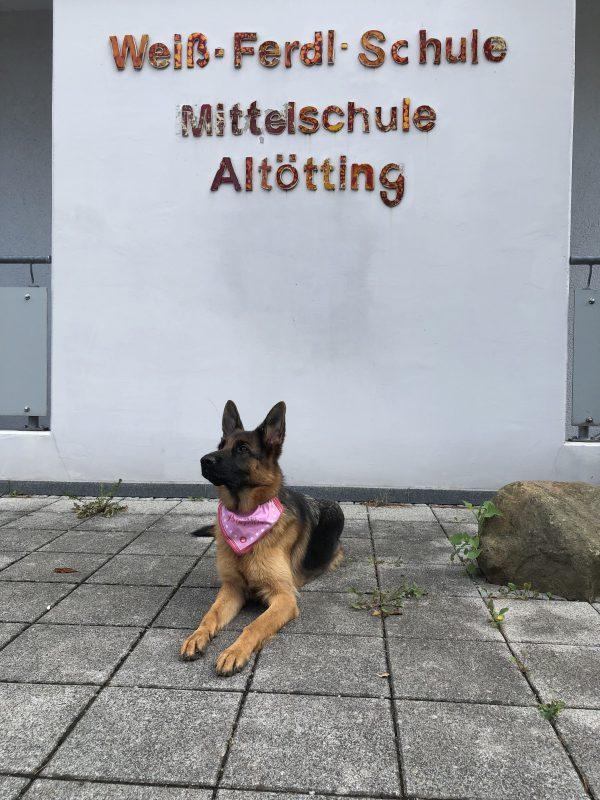 Schulhund
